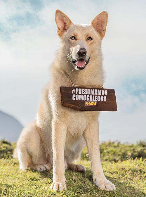 Campaña Gadis Perro