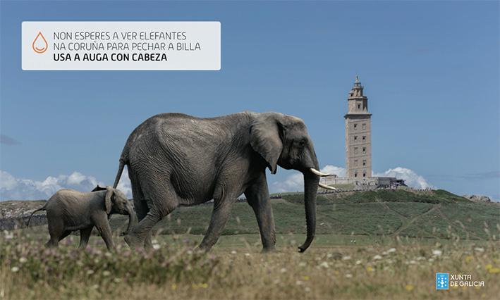 agua_xunta_elefante