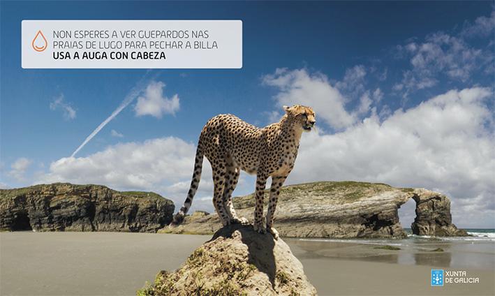 agua_xunta_guepardo